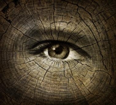 woodeneye